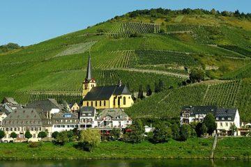 Duitse wijnboer kiest voor wit
