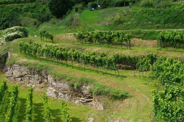 Oostenrijk blij met kwaliteit oogst