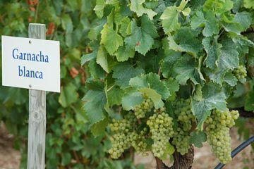 Spaanse wijnhandel in de lift