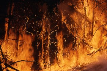 Chileense wijnregio vecht tegen bosbranden