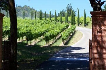 Amerikaanse wijngaarden breken record met directe verkoop