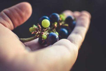 Groeiende markt voor puur natuur
