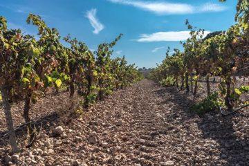 Rioja stevent af op nieuw record