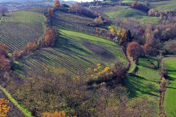 Schijnwerper op Italiaanse wijnen
