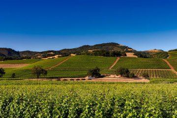 Dreigende handelsoorlog treft winery's Californië