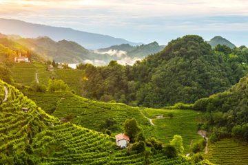 Prosecco-heuvels niet op Werelderfgoedlijst