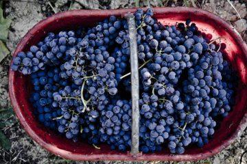 Italië beleeft betere oogst