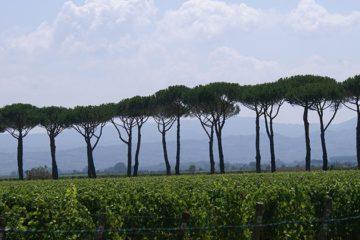Italië kan nog meer uit wijntoerisme halen