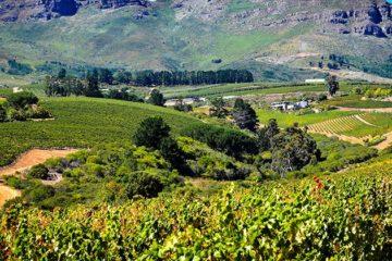 Oogst Zuid-Afrika valt tegen