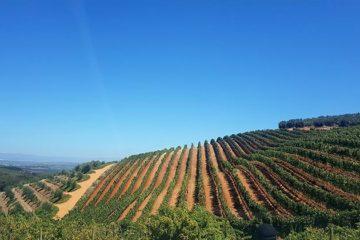 Zuid-Afrikaanse alcoholsector staat met rug tegen de muur