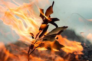 Het brandt weer in Napa Valley