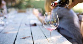 Bedrijvigheid bij Nederlandse wijngaarden