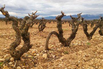 Rioja doet goede zaken