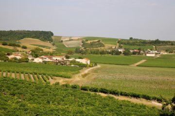 Cognac-markt sluit 2020 af met goed kwartaal