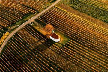 Oostenrijk tevreden over oogst