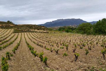 Viñedos de Álava heeft eerste hobbel genomen