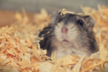 Slijter profiteert niet van hamstergedrag